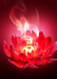 大氣高端紅色花朵背景