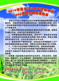 農產品宣傳彩頁