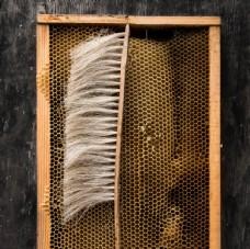 蜂蠟 蜂窩 蜂蜜 蜜蜂