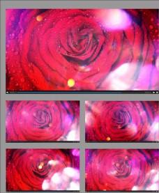 帶有露珠的花朵旋轉視頻素材