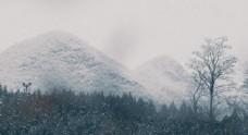 春初雪景雪花飘落
