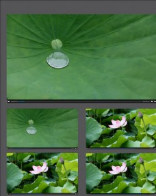 雨荷荷塘視頻拍攝