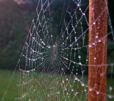 沾滿露珠的蜘蛛網