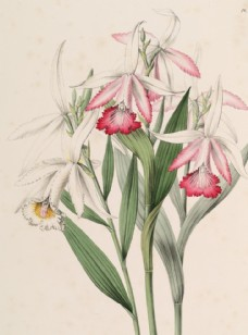手繪插畫 花卉裝飾畫 花草圖譜