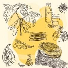 手绘大豆和豆制品