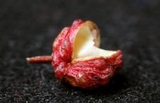 调料微距摄影之花椒