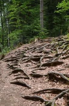 森林 自由 方向 景观 旅行