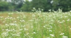 實拍唯美春日花朵變焦鏡頭