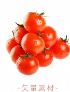 番茄 西红柿
