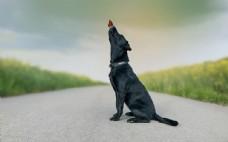 马路上的黑狗