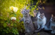 小猫宠物猫咪背景