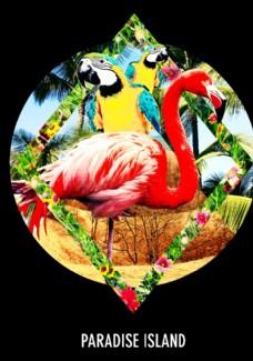 火烈鸟鹦鹉摄影剪切潮流艺术海报