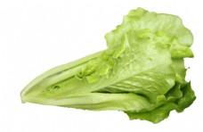 无公害有机蔬菜春菜