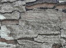 木材 树干 森林叶 树皮