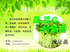 绿色无公害芽苗菜