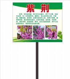 园林紫荆简介牌子